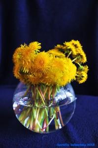 Bouquet de pissenlits
