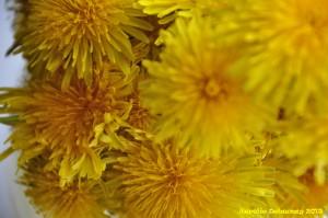 Bouquet de pissenlits - macro 2