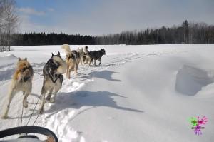 Traineau à chiens - paysage dans un virage